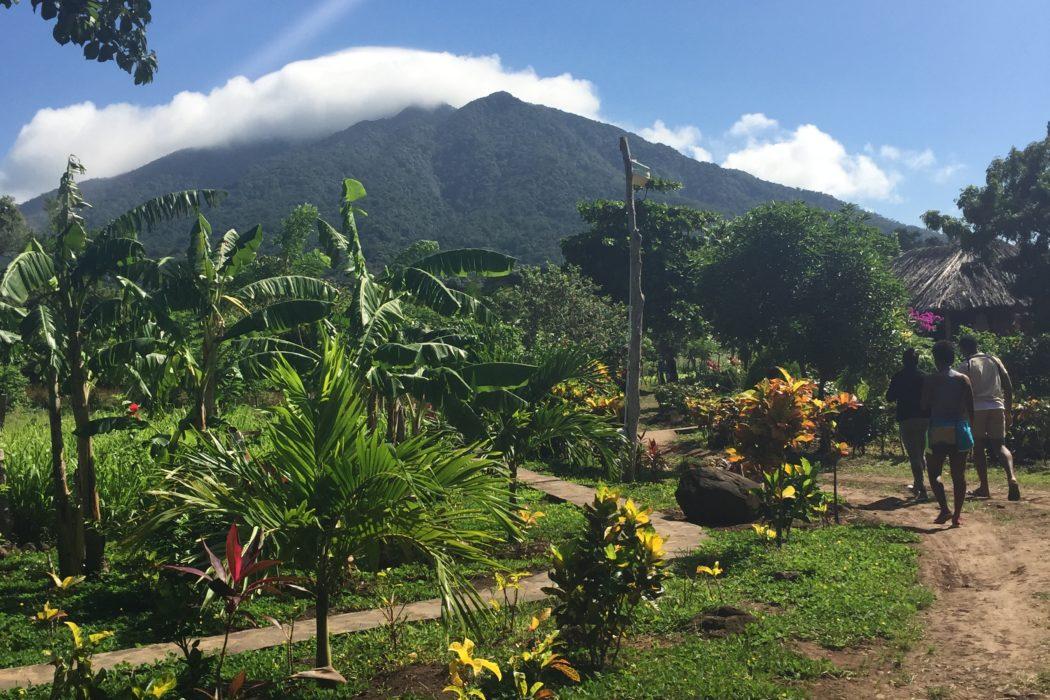 Ometepe Island Jungle Nicaragua